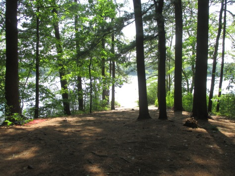 More gorgeous views of the pond through the trees. Walden Pond, Concord MA.